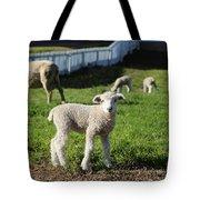 A Longwool Lamb Tote Bag
