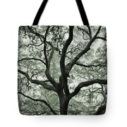 A Look Through The Branches   Tote Bag