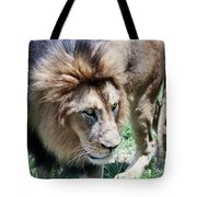 A Male Lion, Panthera Leo, King Of Beasts Tote Bag