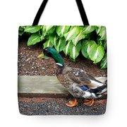 A Male Mallard Duck 4 Tote Bag