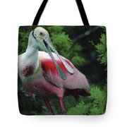 A Male Roseate Spoonbill Is In Breeding Tote Bag