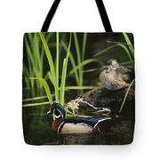 A Male Wood Duck Swims Past Its Mate Tote Bag