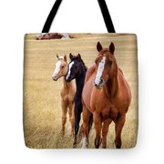 A Mare And Two Friends Tote Bag