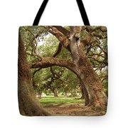 A Maze Of Oak Trees  Tote Bag