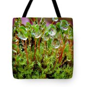 A Microcosm Of The Forest Of Moss In Rain Droplets Tote Bag