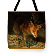 A Nocturne  Meeting With A Fox In The Woodland Tote Bag