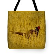 A Pheasant Looking For A Mate Tote Bag