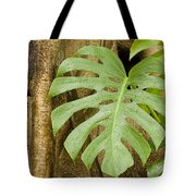 A Philodendron Grows On The Side Tote Bag