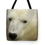 A Polar Bear At The Henry Doorly Zoo Tote Bag