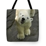 A Polar Bear Looks Up At Its Observers Tote Bag