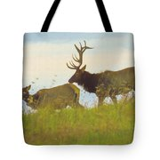 A Portrait Of A Large Bull Elk Following A Cow,rutting Season. Tote Bag