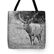 A Rack Of Antlers - Roosevelt Elk - Olympic National Park Wa Tote Bag