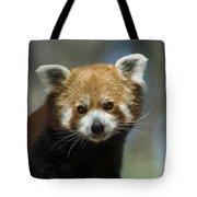 A Red Panda Ailurus Fulgens At Zoo Tote Bag