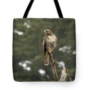 A Red-tailed Hawk Juvenile Tote Bag