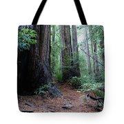 A Redwood Trail Tote Bag
