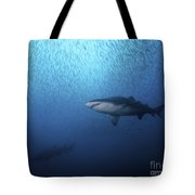 A Sand Tiger Shark And School Of Cigar Tote Bag