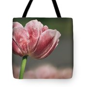 A Soft Tulip In Focus Tote Bag