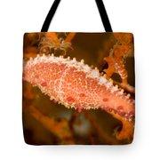 A Spindle Cowrie Snailphenacovolva Sp Tote Bag