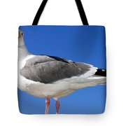 A Splendid Seagull Tote Bag