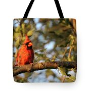 A Spot Of Red In The Trees Tote Bag
