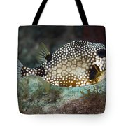 A Spotted Trunkfish, Key Largo, Florida Tote Bag