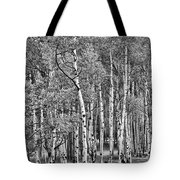 A Stand Of Aspen Trees In Black And White Tote Bag