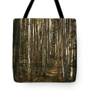 A Stand Of Birch Trees Show Tote Bag