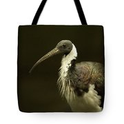 A Straw-necked Ibis Threskiornis Tote Bag
