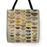 A Study Of Moths Characteristic Of Indo Tote Bag