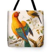 A Sun Conure Parrot  Tote Bag
