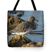 A Surfbird At The Tidepools Tote Bag