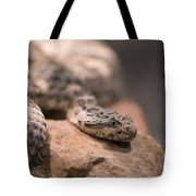 A Tiger Rattlesnake At The Henry Doorly Tote Bag