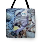 A Titan Triggerfish Faces Tote Bag