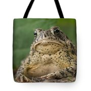 A Toad Appears To Be Frowning He Sits Tote Bag