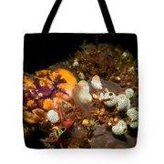 A Ton Of Tunicates Tote Bag
