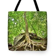 A Tree And It's Roots Tote Bag