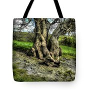 A Tree In A Pool Of Light Tote Bag