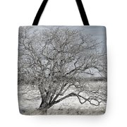 A Tree In Canaan Tote Bag