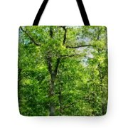 A Tree In The Woods At The Hacienda  Tote Bag