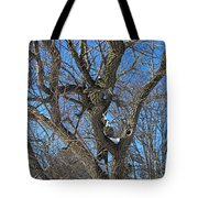 A Tree In Winter- Vertical Tote Bag
