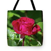 A Watered Rose  Tote Bag