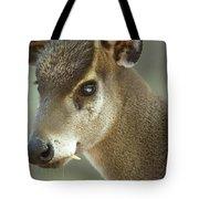 A Western Tufted Deer Elaphodus Tote Bag