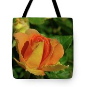 A Wet Rose  Tote Bag