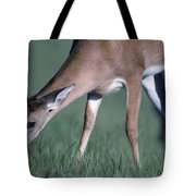 A White-tail Deer Munches On Some Green Tote Bag