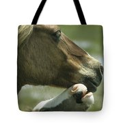 A Wild Pony Foal Nuzzling Its Mother Tote Bag