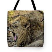 A Yawning Lion Tote Bag