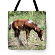A Young Painted Colt  Tote Bag