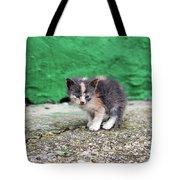 Abandoned Kitten On The Street Tote Bag