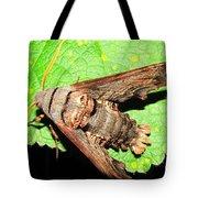 Abbotts Sphinx Moth Tote Bag