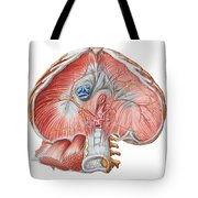 Abdominal Surface Of Diaphragm Tote Bag